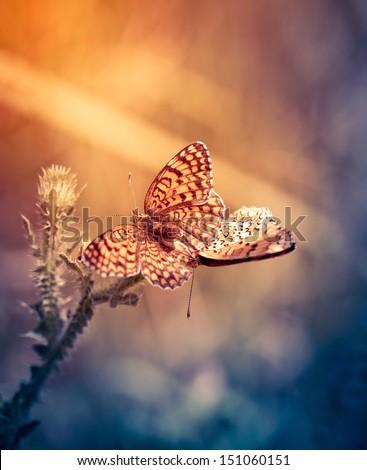 Two butterflies in love - stock photo