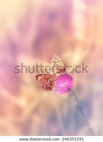 Two butterflies on the flower - stock photo
