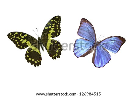 two butterfly on white background