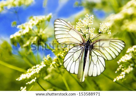Two butterfly sitting on top of each other on the plant in summer warm weather. - stock photo
