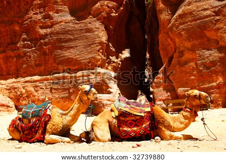 Two camels near Treasury temple at Petra (Al Khazneh), Jordan