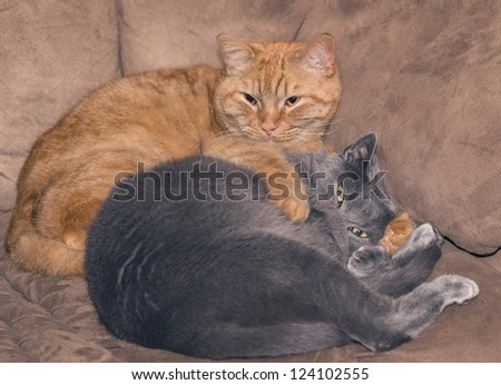 Two cat pals on a couch - stock photo