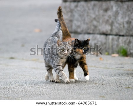 Two cats - stock photo