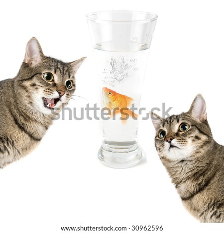 Two cats and gold fish in a bowl isolated on white - stock photo