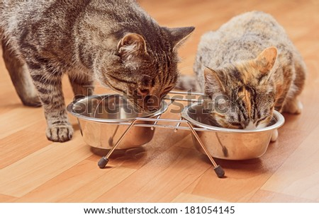 Two cats are eating from a bowl - stock photo