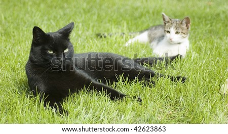 Two cats, black and white, laying in the grass - stock photo