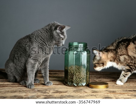 Two Cats curious about Cat Food in glass Jar - stock photo