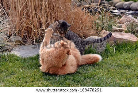Two cats fighting on the garden