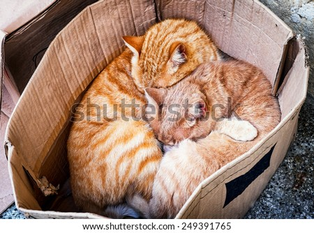 two cats in a box - stock photo