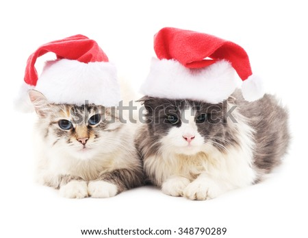 Two cats in Christmas hats isolated on a white background.