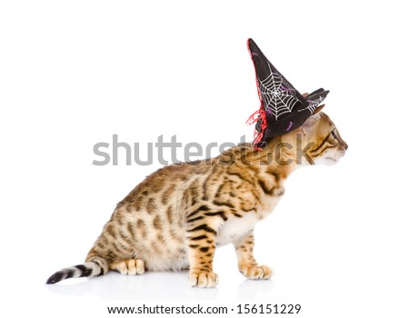 two cats in costume for a masquerade. isolated on white background - stock photo