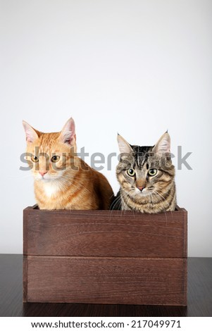 Two cats in wooden box on table isolated on white - stock photo