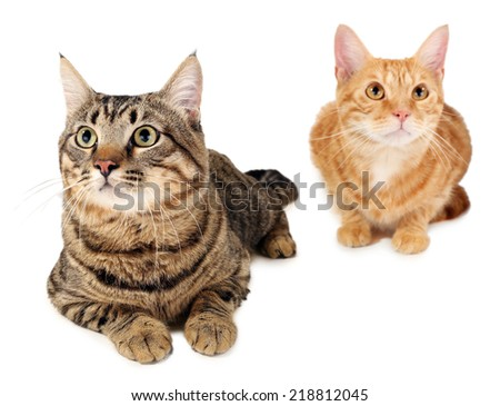Two cats isolated on white - stock photo