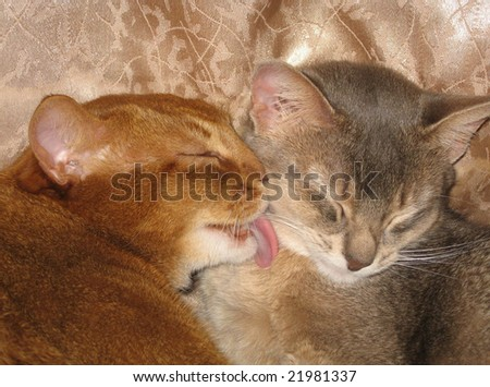 two cats (lot) - stock photo