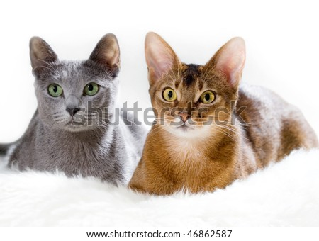 Two cats lying on the sofa - stock photo