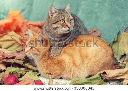 Two cats relaxing on fallen leaves - stock photo