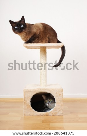 two cats resting on small cat tower or cat tree                              - stock photo