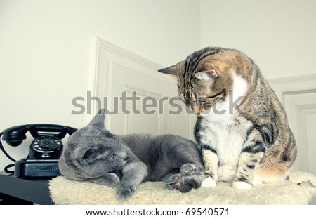 Two cats sitting and lying together on lambskin - stock photo