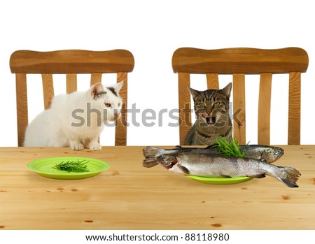 Two cats sitting at table with one plate  fish