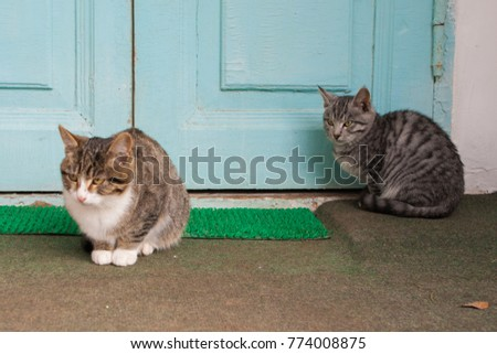 Two cats sitting by the door