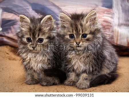 two cats sitting on the bed - stock photo