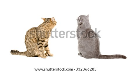 Two cats sitting together, back view, isolated on white background - stock photo