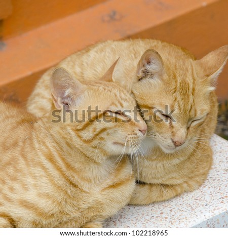 Two cats sleep - stock photo