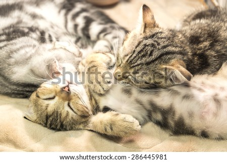 Two cats sleeping ,Lazy cats - stock photo