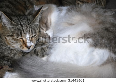 two cats slipping