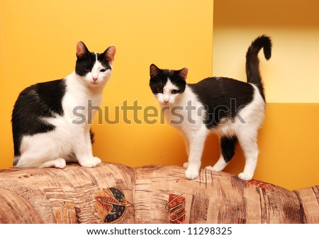 Two cats - twins - stock photo