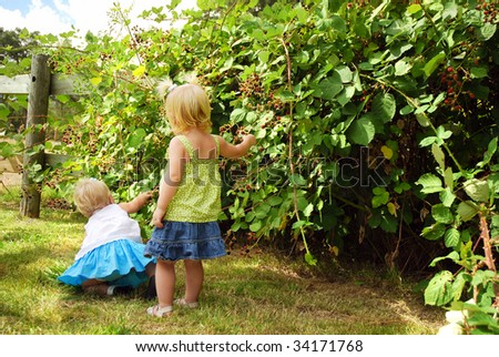 Two caucasian toddlers picking blackberries on farm - stock photo