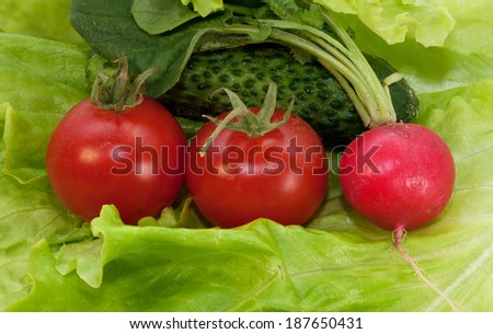 Two cherry tomato, radish and cucumber on lettuce leaf