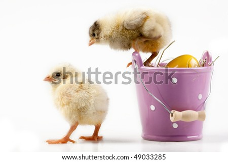 two chicks and bucket with egg inside - stock photo