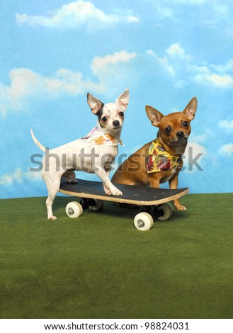 Two Chihuahuas and a Skateboard