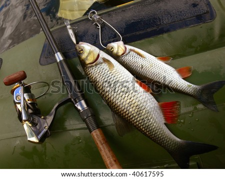 Two chubs in the boat with rod and lure - stock photo