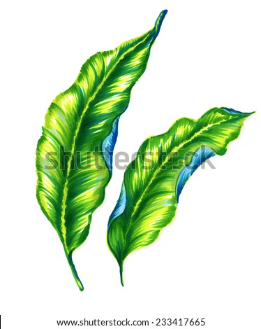two classical embellished realistic art nouveau style leaves. exotic leaves isolated on white. - stock photo