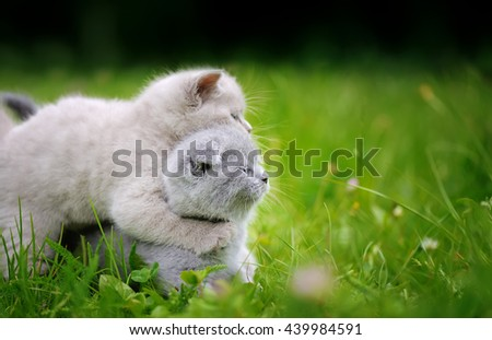 Two close cute gray baby kitten in green grass  - stock photo