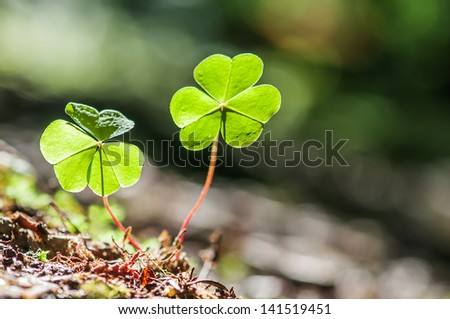two clover leaf on dark background - stock photo
