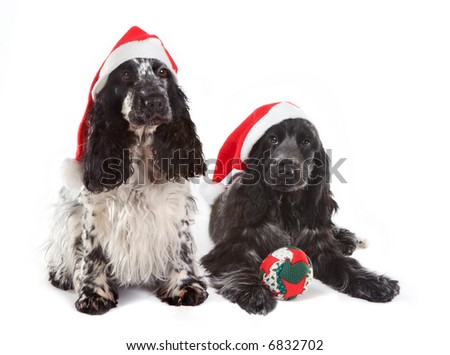 Two cocker spaniel dogs with christmas decorations - stock photo