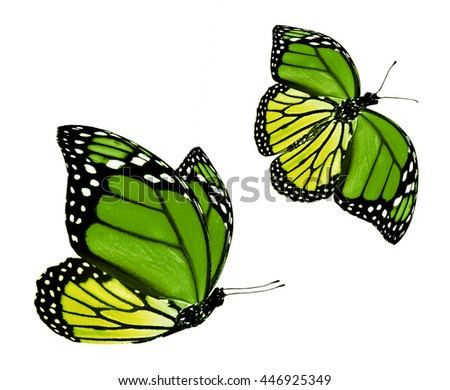 Two color butterfly, isolated on white
