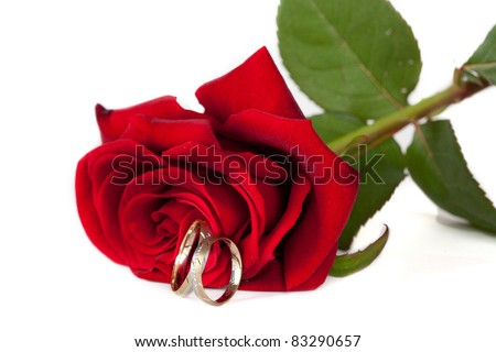 Two color (gold and silver) wedding rings with a red rose - stock photo