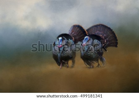 Two colorful male tom wild turkeys transformed into a textured painting