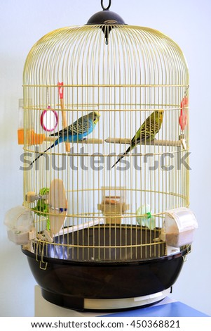 Two colorful shell parakeets in yellow cage.