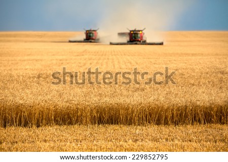 Two combines cutting a swath through the middle of a wheat field during harvest. - stock photo