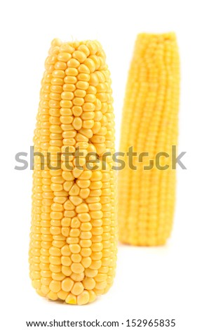 Two corncobs on a white background