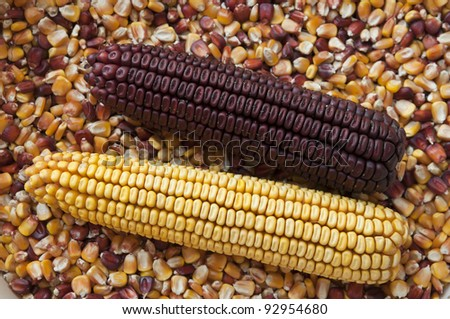 Two corns ot the cobs over  seeds - stock photo