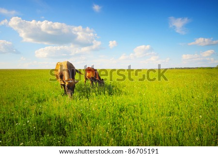 Two cows baby and mother grazing on a green meadow. - stock photo