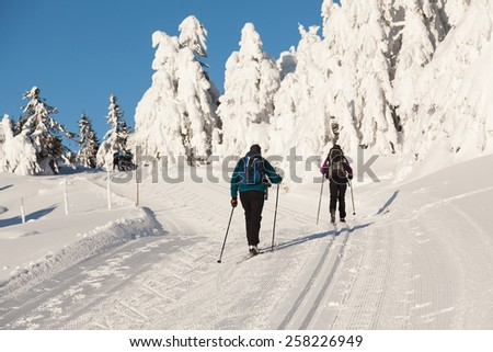 Two cross country skiers with backpacks climbing a hillside with snow wrapped firs  - stock photo