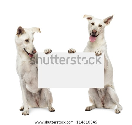 Two Crossbreed dogs sitting and holding white sign against white background - stock photo