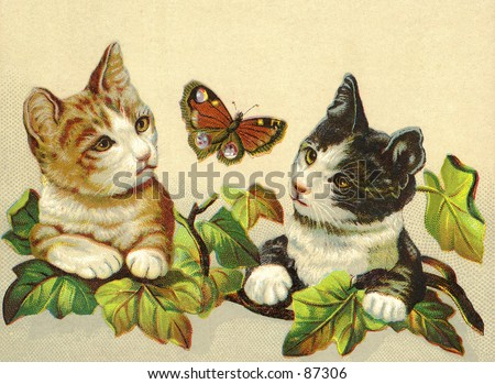 Two curious kittens chasing a butterfly - a vintage (c.1890) illustration. - stock photo